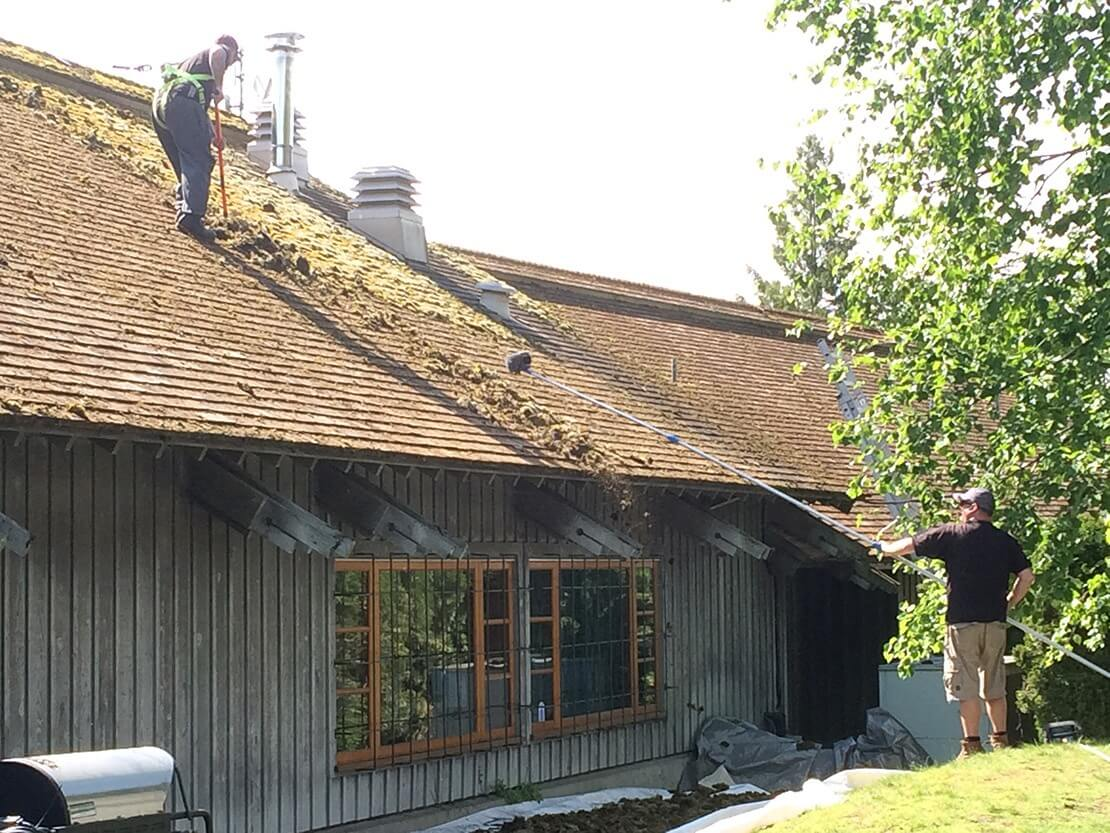 Hand Removal of Cedar Roof Moss