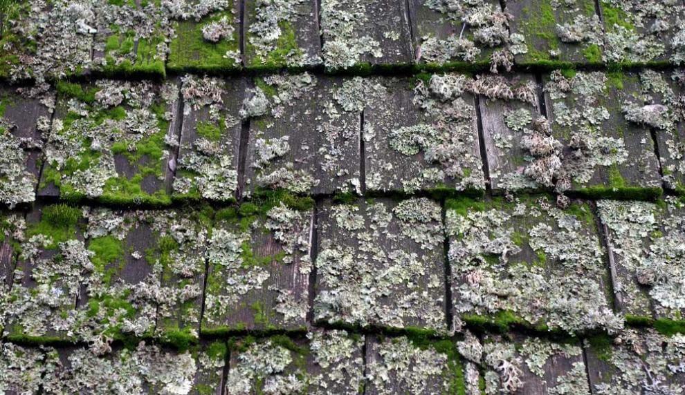 moss_roof_blog2