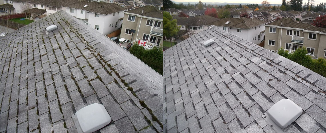 Roof Moss Removal Before/After