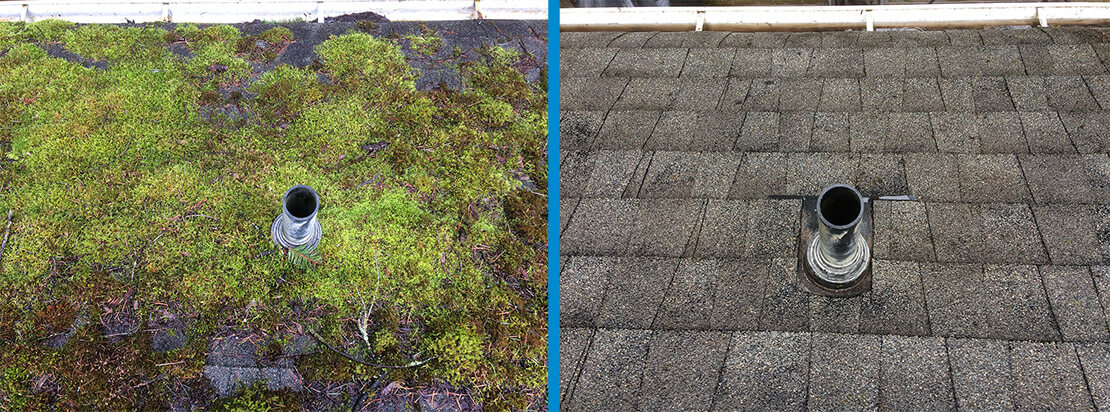 Top Roof Moss Removal Near Me