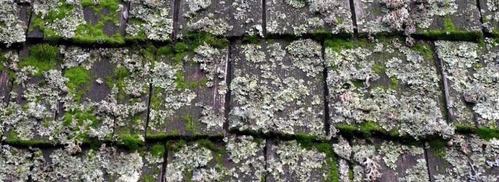 rotting roof