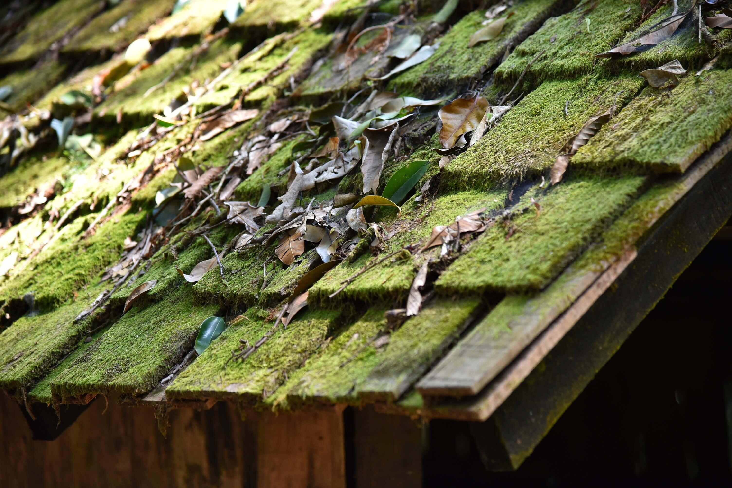 A roof covered in moss.