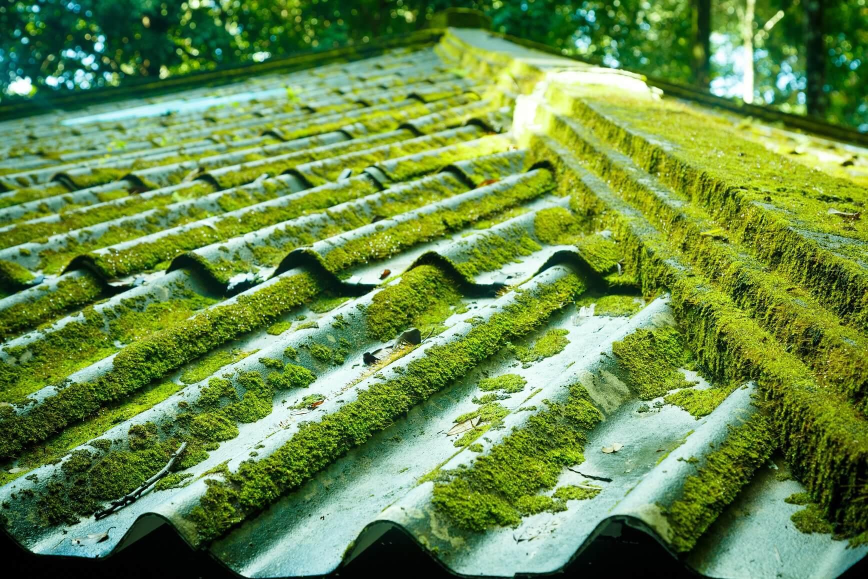 Moss On Metal Roofs Rotban Blog Rotban Vancouver Surrey