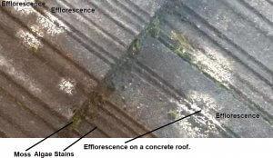 Efflorescence Photo